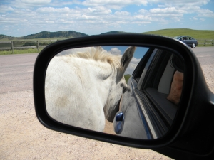 burro in mirror