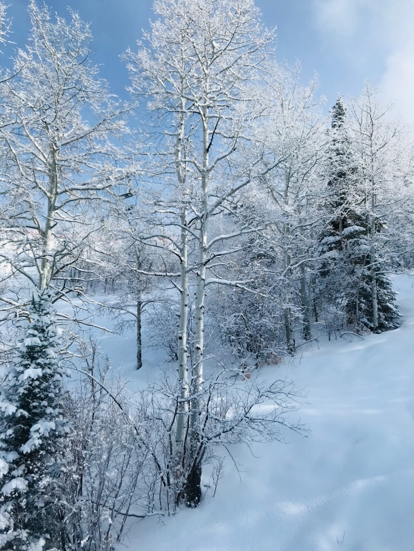 Winter Colorado, snow trees, ski Colorado